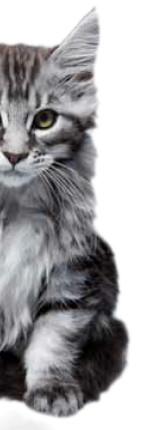 gratuit rencontres conseils chat profiter du site de rencontre caché