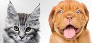 rencontres veterinaires eleveurs chiens chats